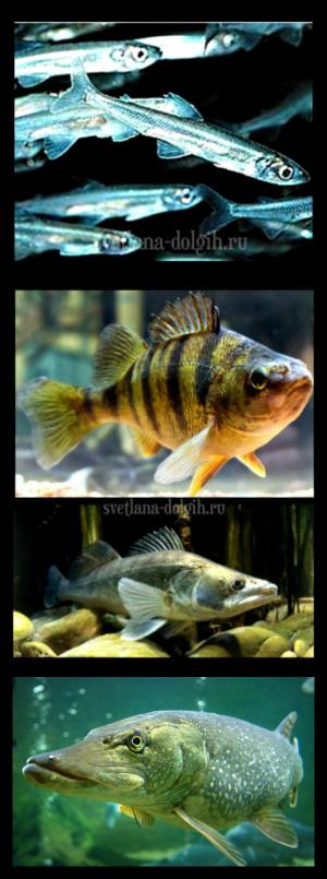 samaya-poleznaya-ryba-2